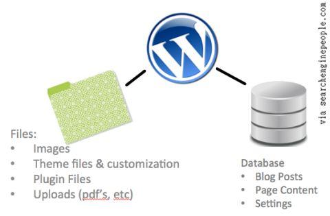 The WordPress Database